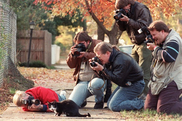 Celebrity Cats / Photo by MIKE NELSON/AFP/Getty Images