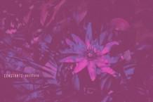 Constants, 'Pasiflora' (The Mylene Sheath)