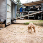 Outside Lands Behind the Scenes: Metallica's Cars, Norah Jones' Dog, Obama on a Unicorn