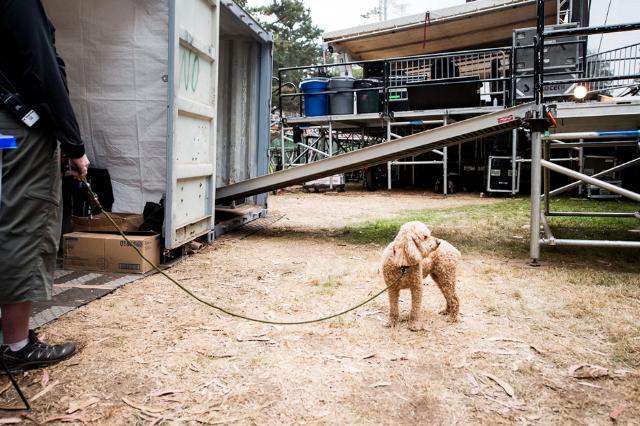 Norah Jones' dog, Ralph / Photo by Wilson Lee