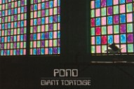 Tame Impala Offshoot Pond Streams 'Giant Tortoise' From 'Manic Acid Rock' LP