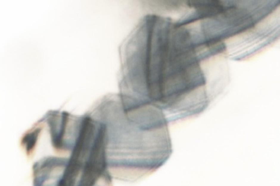 Sd Laika 'Idiot Thug' Mix Stream Tri Angle Records