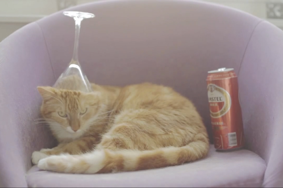 Cat Gets Hammered Listening to Chillwave