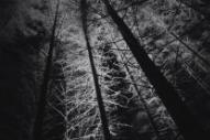 Royksopp Rave in a Creepy Cabin in Their 'Skulls' Video
