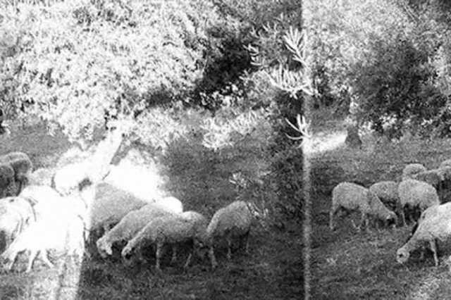 Godspeed You! Black Emperor, Asunder Sweet and Other Distress