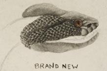 150413-brand-new