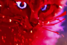 mastodon cat