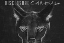 150731-Caracal