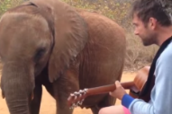 Watch Damon Albarn Sing 'Mr. Tembo' to the Elephant Who Inspired the Song