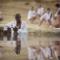 le1f-koi-music-video