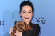 Katy Perry's Dog Peed on Her