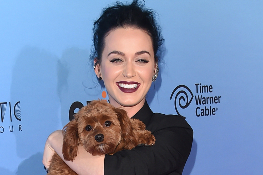 Katy Perry S Dog Peed On Her Spin