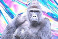 UPDATE: There Won't Be a Harambe Hologram at Day for Night After All