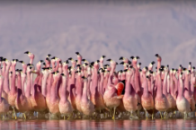 planet earth ii trailer video