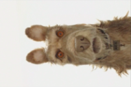 Here&#8217;s Your (Extremely Brief) First Look at Wes Anderson&#8217;s New Animated Film, <i>Isle of Dogs</i>