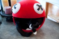 Deadmau5 Wants to Trademark His Cat's Name