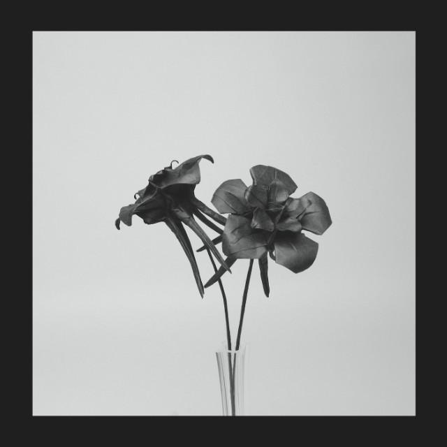 JLIN-DarkLotusFrontCover
