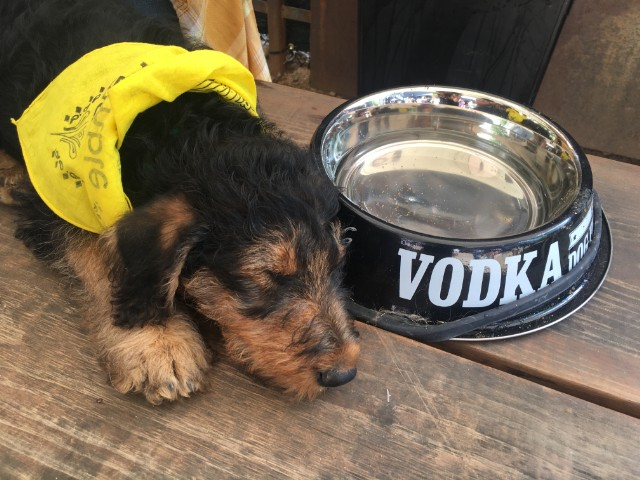sxsw-dogs-elliott-1489875170