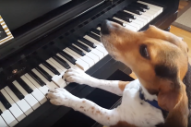 Sing Us a Song, You're the Piano Dog