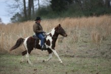 Roy Moore is bad at riding horses
