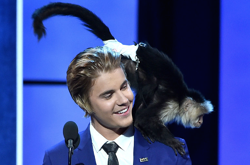 German Zoo Says Justin Bieber S Illegal Monkey Quot Still Has