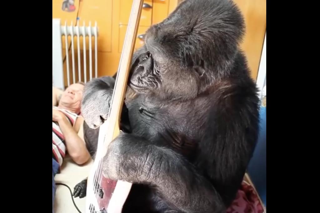 flea collaborator koko the gorilla dead at 46 spin