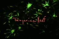 Animal Collective Release New Trailer for Upcoming Album <i>Tangerine Reef</i>
