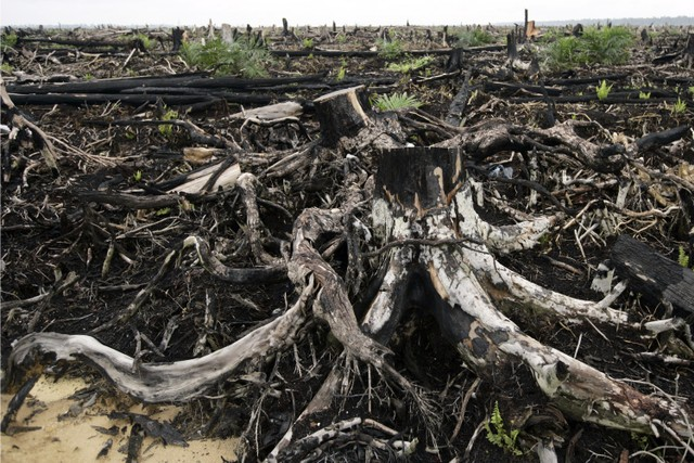 Sumatran rain forest destroyed