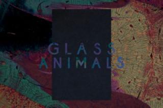Watch Glass Animals' Creepy Yet Seductive 'Black Mambo' Video