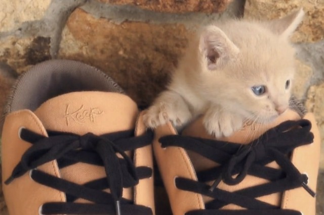 Bon Iver keep shoes video kittens dogs