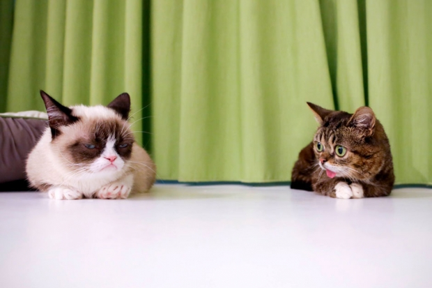 Grumpy and Lil BUB meet for the first time at the Internet Cat Video Festival